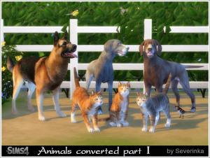 Декоративные животные Image234