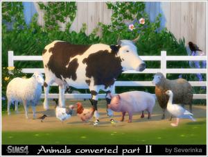 Декоративные животные Image330
