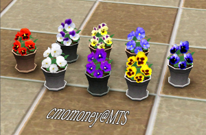 Цветы - Страница 6 Image718