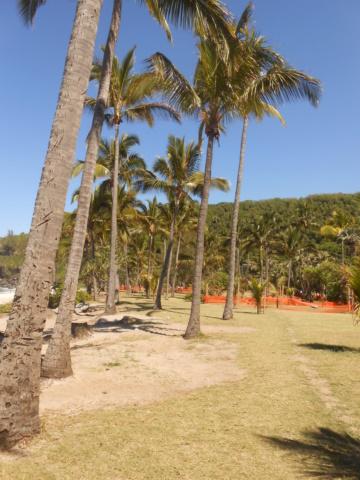 Grand' Anse, La Réunion Dscn6918