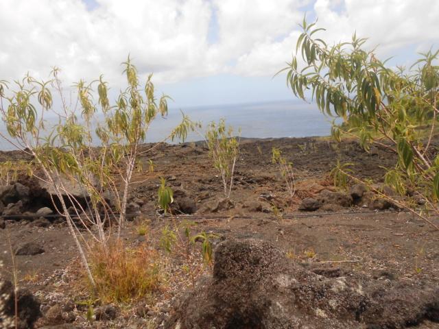 Sur la route des laves entre Saint Pierre et Sainte Rose La Réunion sud  Dscn7010