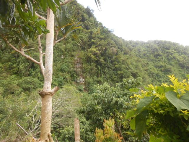 La rivière Langevin, La Réunion Dscn7123