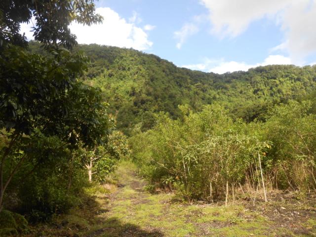 La rivière Langevin, La Réunion Dscn7125