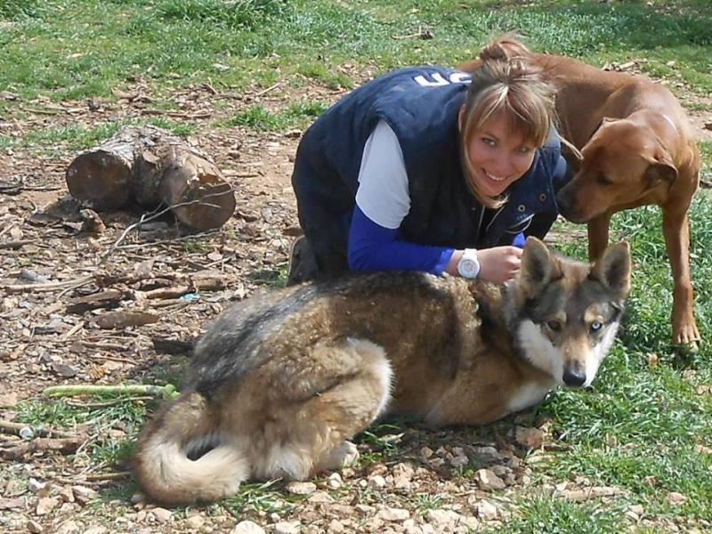 JO et JENA, Chien-loup tchèque X Husky, frere et soeur 2011 REFU13 11130110