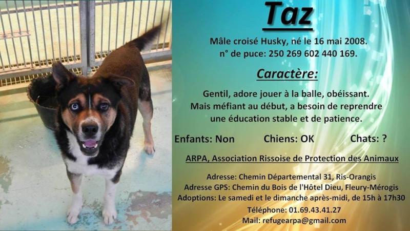 TAZ, husky x Berger, né le 16 mai 2008  besoin de stabilité: REFU91 - Page 3 11159910