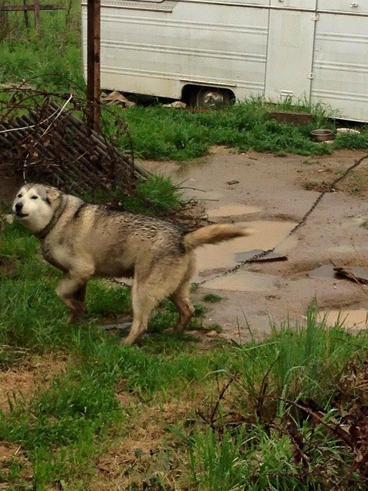 urgent! Apache vivant à l'attache cherche famille 9 ans PART38 11183411