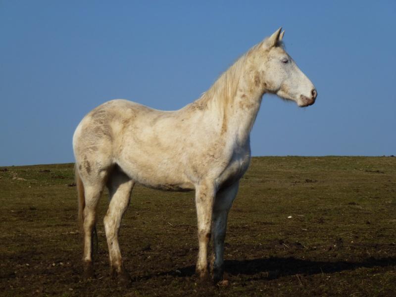 Le cheval et la boue : venez voter !! P1010410