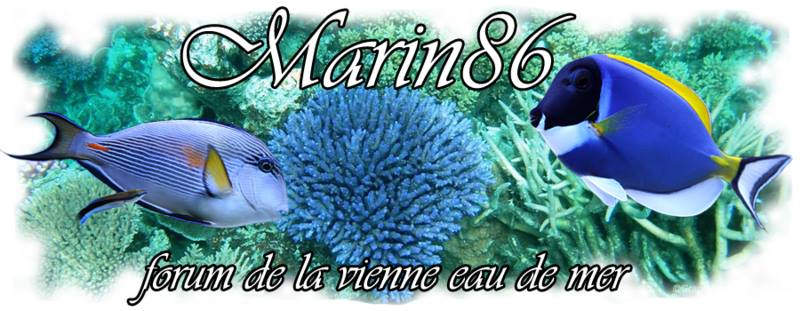 demarrage nouvel aquarium  Bannie13