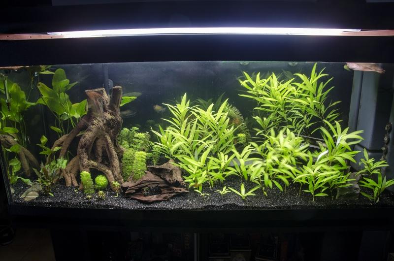 Changement de rampe , peur des algues Dsc_3910