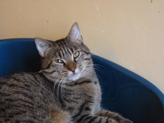 Darbouk, tigré 2 ans, le félin dans toute sa splendeur P1000013