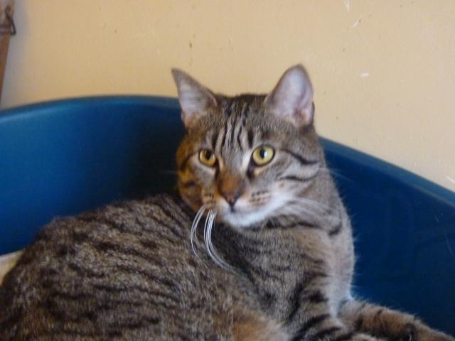 Darbouk, tigré 2 ans, le félin dans toute sa splendeur P1000014