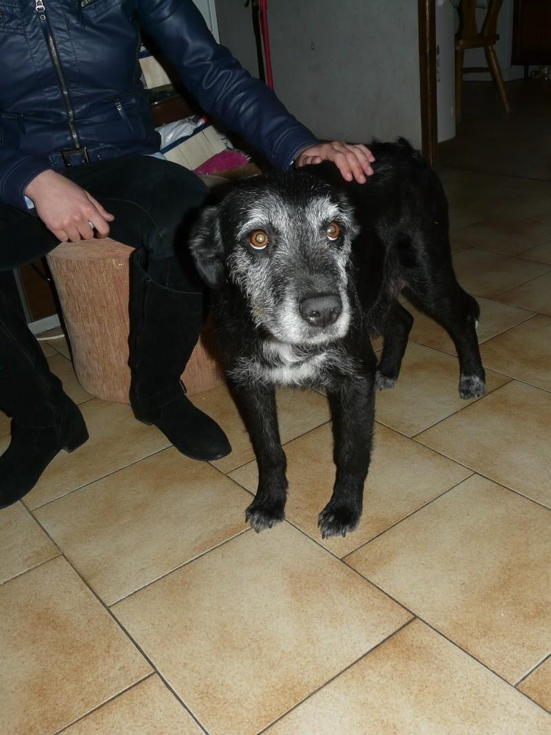 Blackie 4 ans gentille caline euthanasie fin février (Sud) Chiot_14