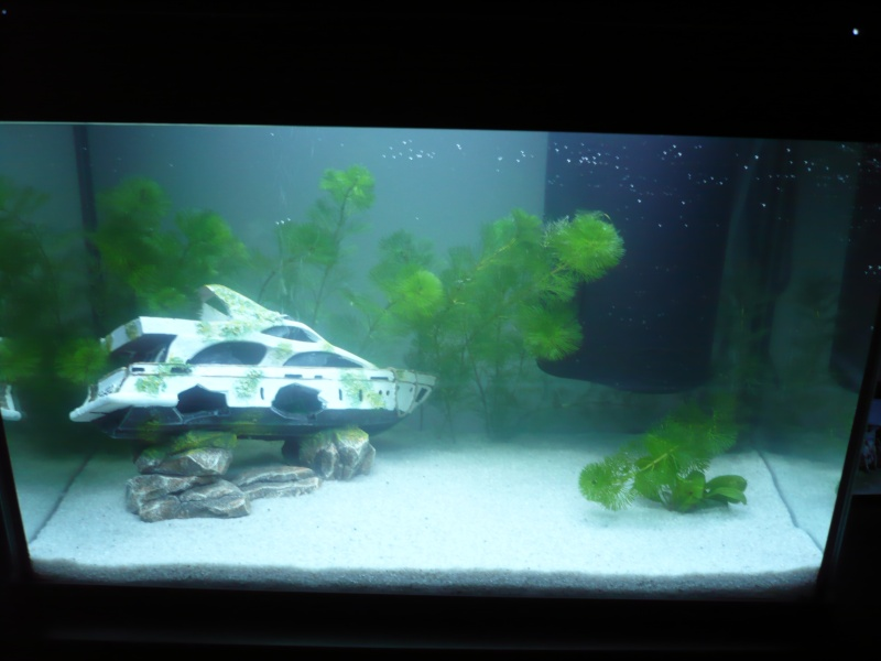 Présentation de mon premier aquarium Black_10