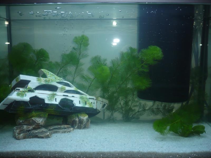 Présentation de mon premier aquarium Face_110