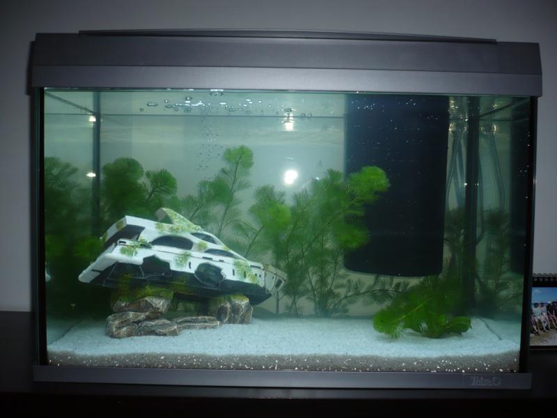 Présentation de mon premier aquarium Face_210