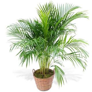 ton petit coin Kulaan Plante10