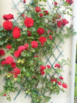 mon jardin ............ Cimg0511