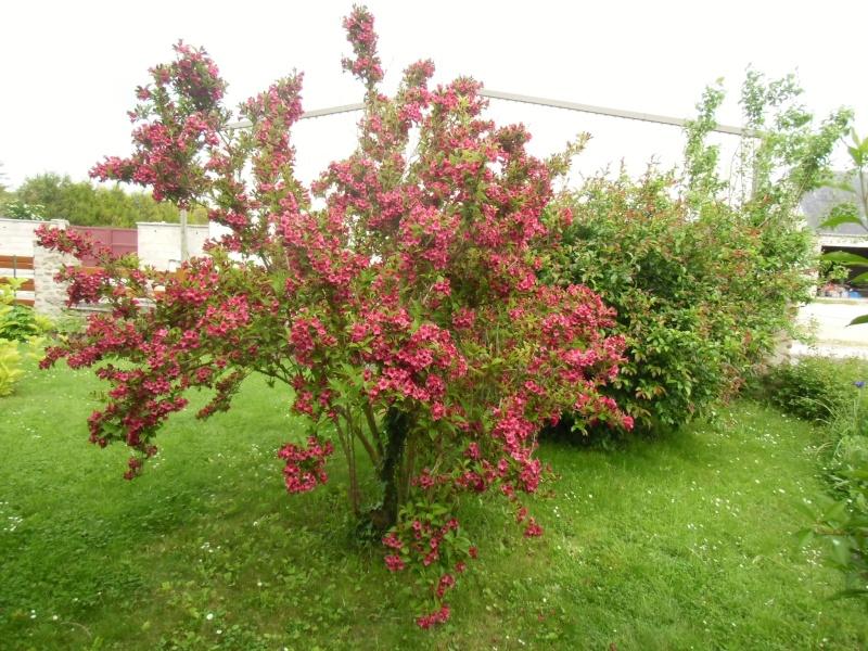 mon jardin ............ Cimg0512