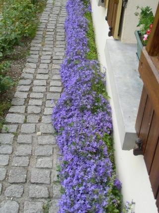 mon jardin ............ Cimg0513