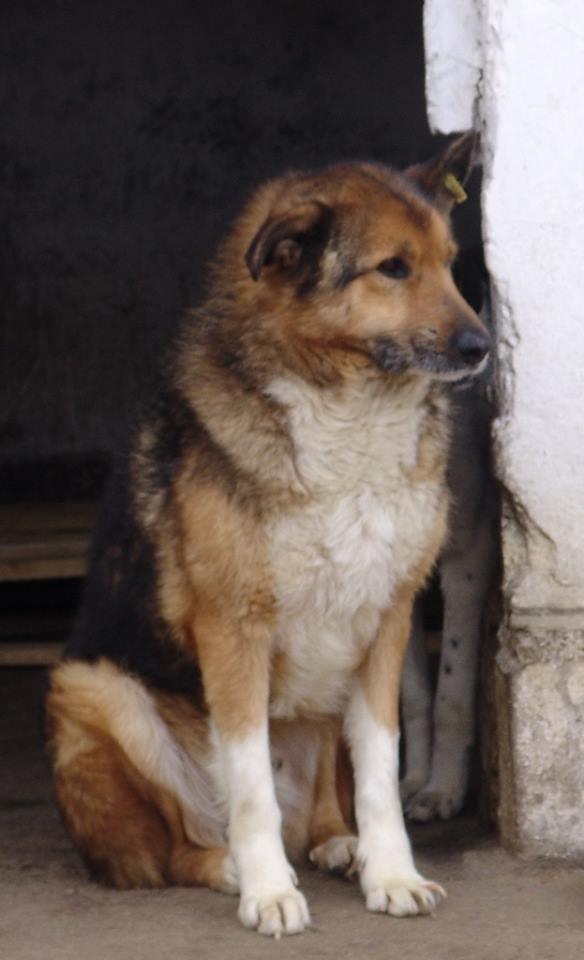 MONSIEUR - mâle,  de taille moyenne, croisé BA, né en 2006 (PASCANI) - En FALD chez Laurence (91) 11012910
