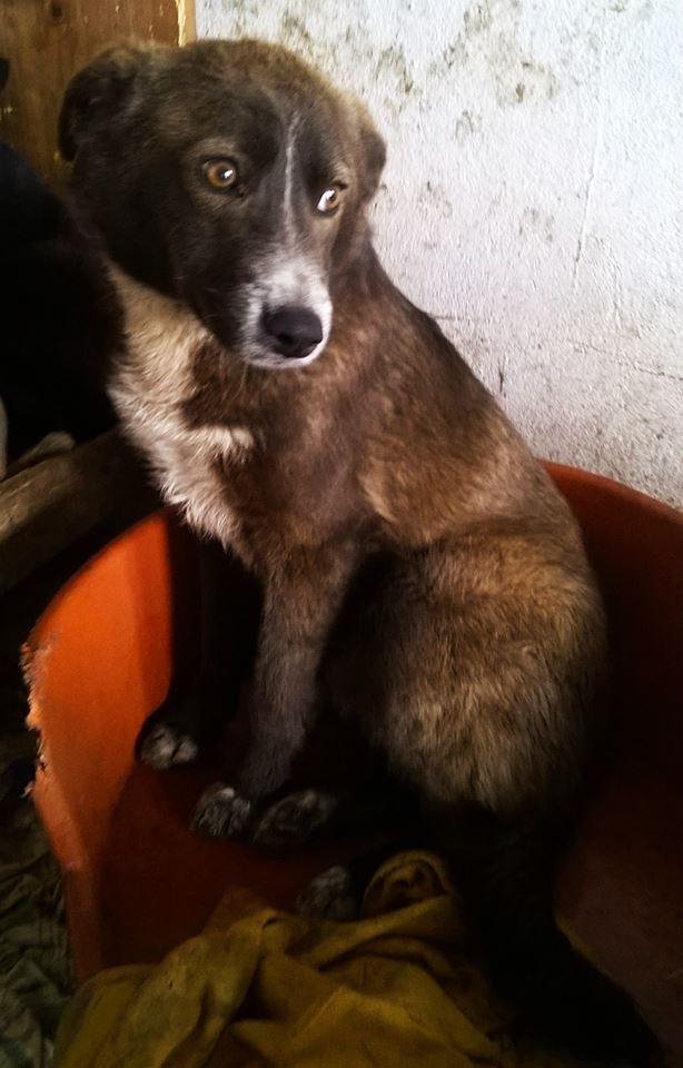 FINO - mâle croisé, taille moyenne né env 2014 (Pascani) - adopté par Laura (dpt 30) 11048710