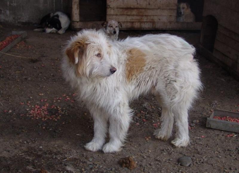 FLASH, mâle, croisé, taille moyenne à grande (Pascani) - adopté par emi et joee (Belgique) - Page 2 11174810