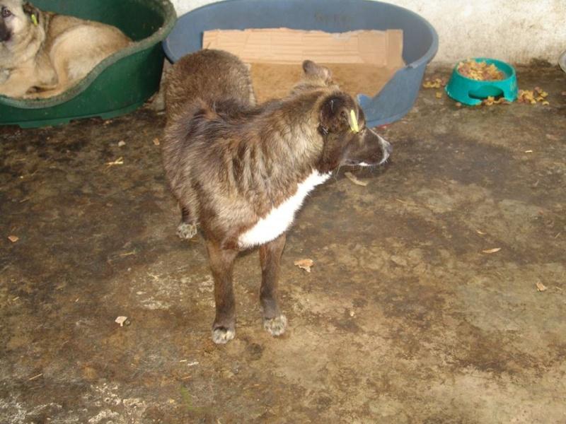 FINO - mâle croisé, taille moyenne né env 2014 (Pascani) - adopté par Laura (dpt 30) 11178211