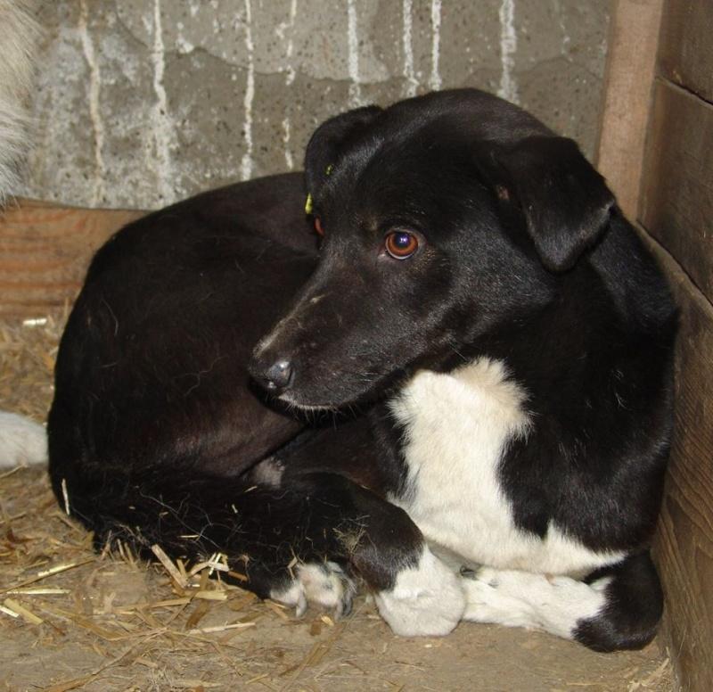 DJENKO - mâle croisé de taille moyenne, né environ juin 2012 -  adopté par Alban (72) - Page 3 11200710
