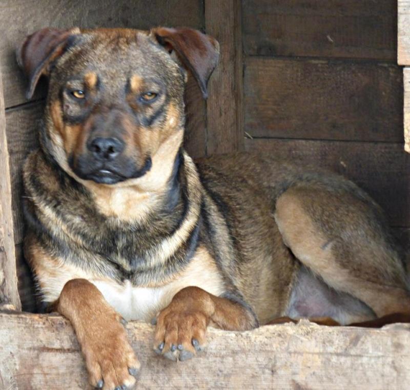 OSCAR - mâle, né environ avril 2012, taille moyenne - En FA chez DarkKing (42) replacé en FA chez Sylvie (02)  11351310