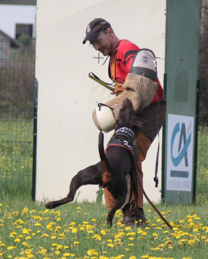Saillie 2015 Bolcanstern Dobermann - Page 2 Img_6716