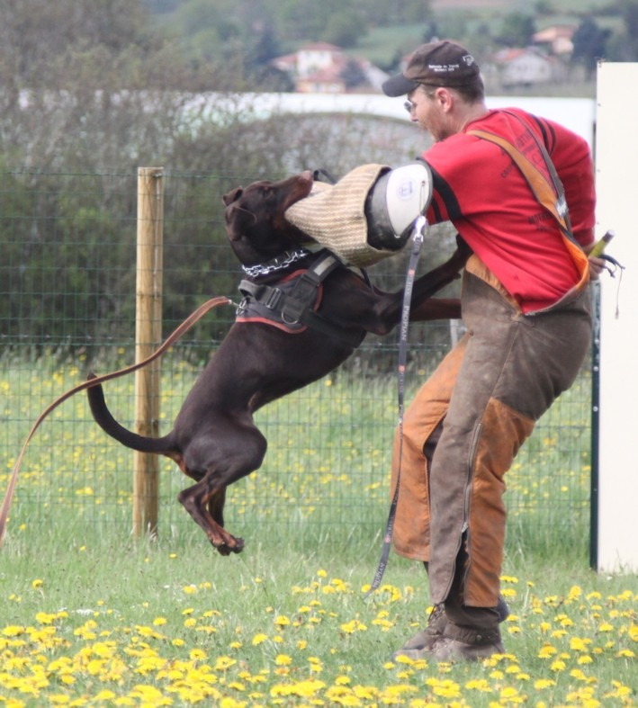 Saillie 2015 Bolcanstern Dobermann - Page 2 Img_6718