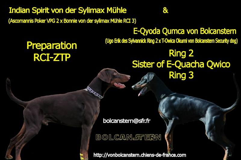 Saillie 2015 Bolcanstern Dobermann - Page 2 Pub211
