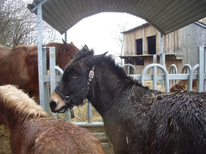 VOYOU - ONC bardot né en 2009 - adopté en avril 2011 par bea - Page 4 Imgp3516