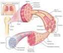 منتدى دكتور خالد أبو الفضل لصوتيات و فيديوهات Nerve and Muscle Physiology
