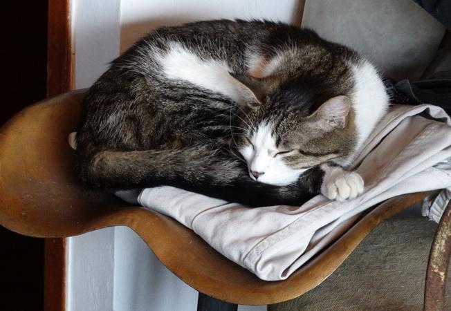 j ' adore mon chat !!! - Page 3 Dsc00313