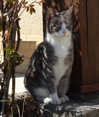 j ' adore mon chat !!! - Page 3 Frele_10