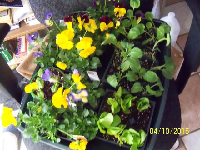 Home Depot Spring Black Friday Sale - $2.00 starter plants 04-10-10
