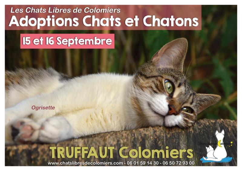 Week-end adoptions 15-16 Septembre Truffaut Colomiers 2018-010