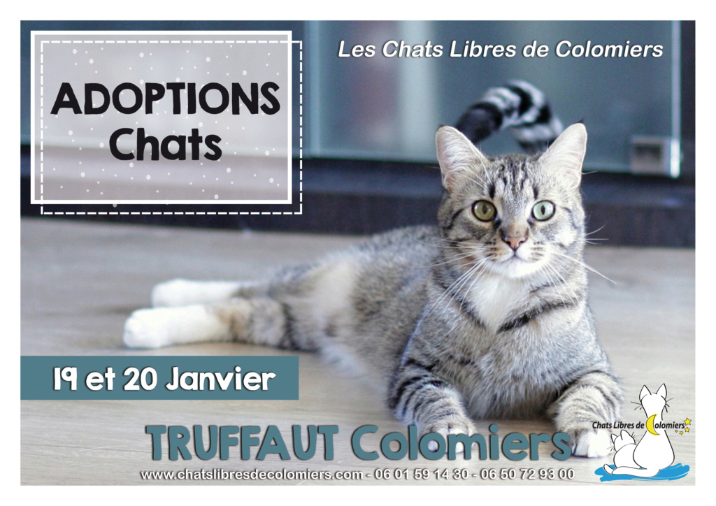 Week-end adoptions 19-20 Janvier à Truffaut Colomiers 2019-010