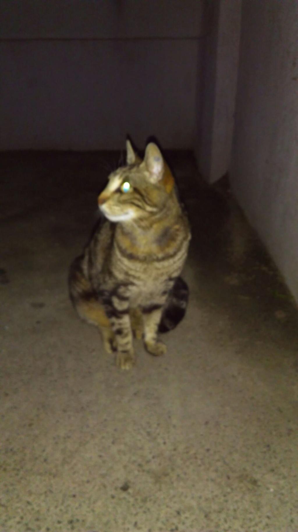 Trouvé chat tigré au Val d'Aran Imag3910
