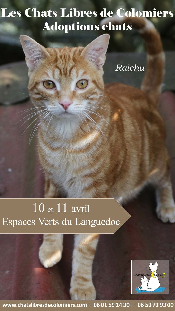 Week-end adoptions Espaces Verts du Languedoc 10 et 11 avril Raichu11