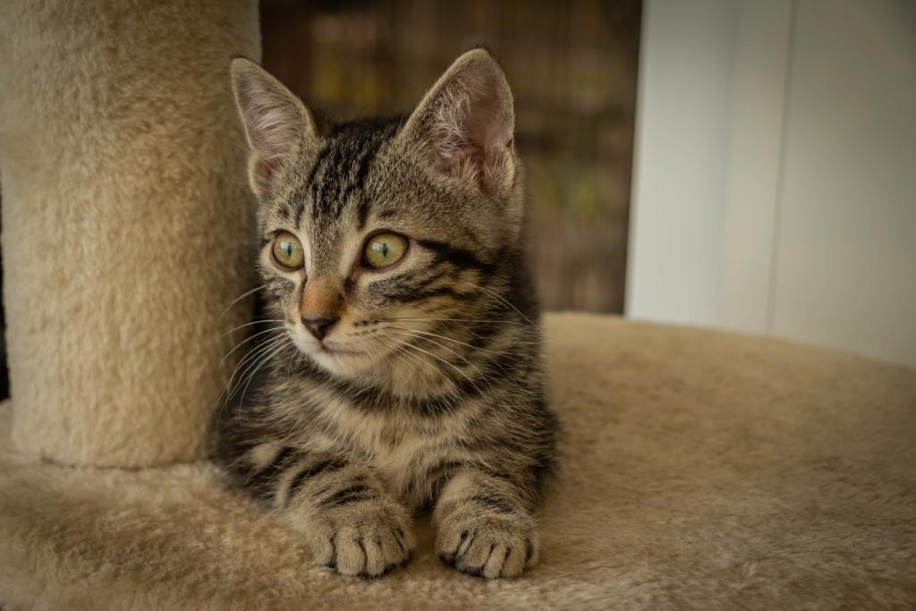 les chatons 2020 Rimini12