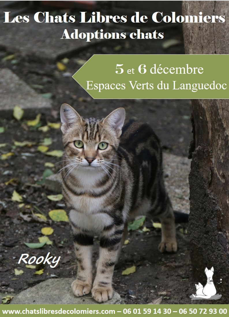 Weekend adoptions aux Espaces Verts du Languedoc, 5 et 6 décembre Rooky_10