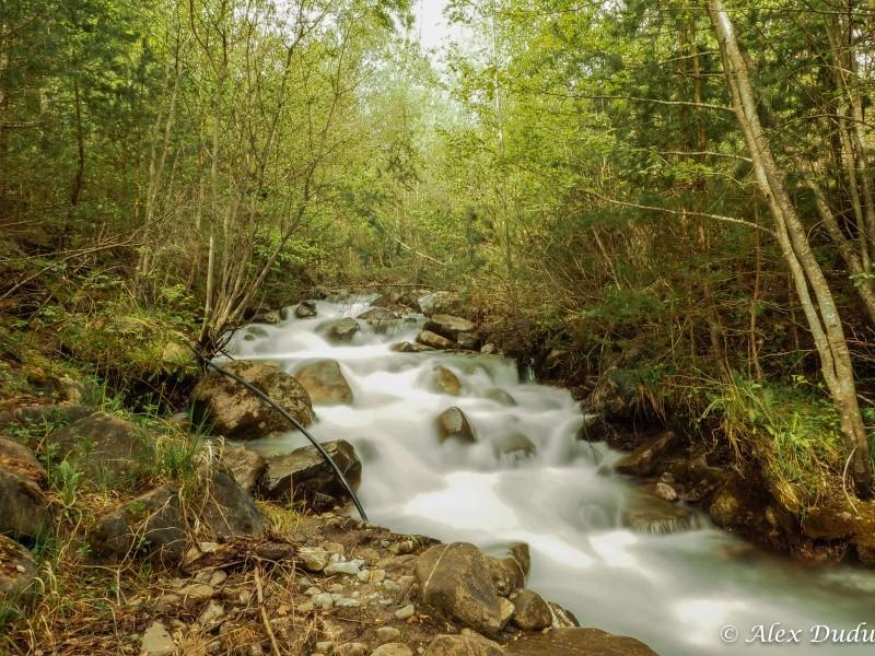 Au milieu coule une rivière P5090011