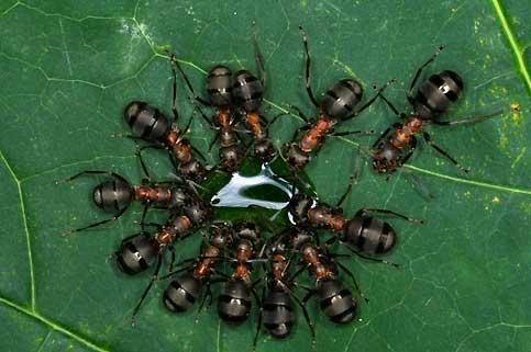 Les fourmis 08120510
