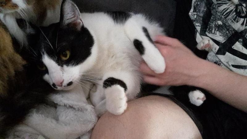 Mikado, noir et blanc, né en Mars 2014  Mika_110