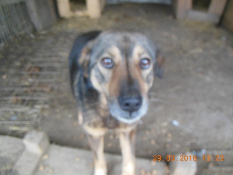 NENIA - Femelle - née en 2009   - Parrainée par Yemtsi et Nanou R-SOS-SC 07710