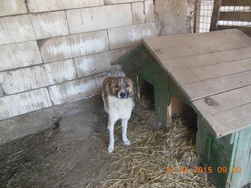 SPIROU, mâle né en 2014 sauvé d'Oltenita - parrainée par Les 3 Loulous -R-SOS-SC Pictu152