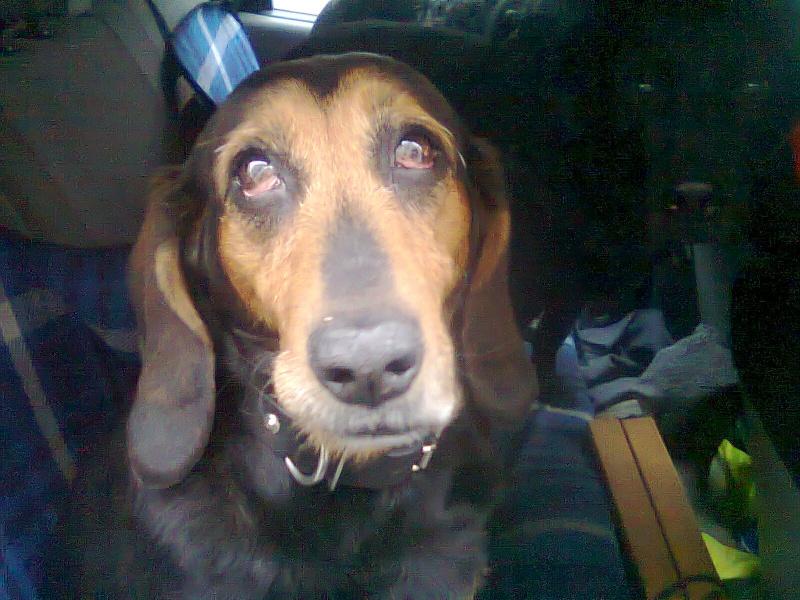 Mettre des gouttes dans les yeux d'un chien Photo011