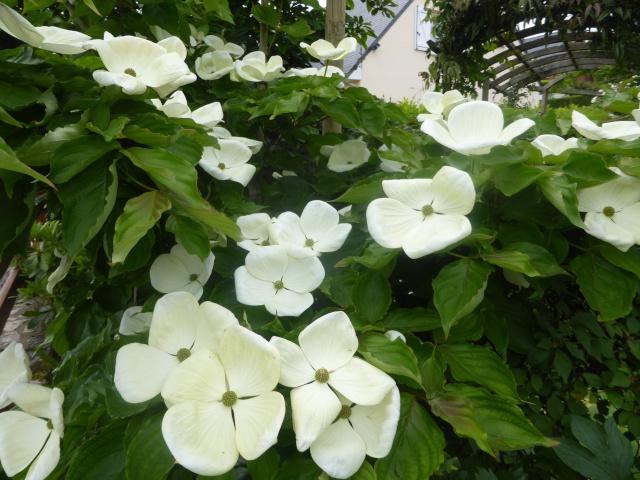 le joli mois de mai des fous jardiniers - Page 6 18-05-11